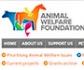 Beca de la 'Animal Welfare Foundation' para veterinarios interesados en el estudio de la salud y el bienestar felino