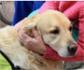 El Hospital de Torrejón reduce un 60% la medicación por depresión, gracias a la terapia con animales
