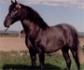 Un estudio ha demostrado que los caballos pueden aprender consignas para comunicarse con los seres humanos