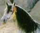 El Caballo Español, reconocido como icono y seña de identidad de España