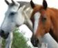 I Curso de diagnóstico y tratamiento del cólico en el caballo, con el patrocinio del COVM