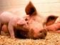 La plataforma europea sobre el bienestar de los animales ya está en marcha