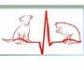 Taller práctico de electrocardiografía en perros y gatos, en la sede del COVM