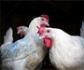 La OIE recomienda reforzar las medidas de bioseguridad en las explotaciones con el fin de frenar la propagaci�n de la influenza aviar en el mundo