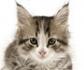 Test de conducta en gatos para valorar la palatabilidad de un alimento