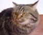 Fractura de cúbito por perdigonazo en un gato. Caso clínico