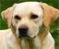 Efectos de la lidocaína o lidocaína-bupivacaína en el canal infraorbital en perros