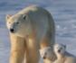 Investigadores de la UCM diseñan una membrana para desalar aguas, inspirada en el pelo del oso polar