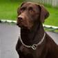Tratamiento quirúrgico de una masa pulmonar en perros