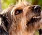 La Facultad de Veterinaria de Lugo acogerá el II Congreso de Etología Canina, organizado por el Grupo de Especialidad de etología clínica de AVEPA
