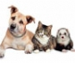 La comunidad de Castilla-La Mancha, implanta de un programa zoosanitario b�sico para perros, gatos y hurones