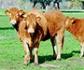 OIE: Hoja informativa sobre el bienestar animal