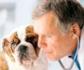 Los veterinarios españoles cobran menos de la mitad que la media de los profesionales sanitarios