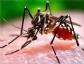 Nace en Barcelona el primer bebé de España con microcefalia por zika