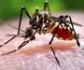 Enfermedades tropicales que se asientan en España