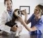 Gobierno y Podemos pactan reducir el IVA veterinario en el acuerdo de los Presupuestos Generales del Estado