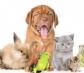 La EMA aprueba la nueva clasificación de antibióticos veterinarios