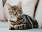 AVEPA: ¿Qué pasa con los gatos y COVID-19? ¡Nada!