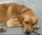 El Ministerio de Agricultura francés confirma finalmente que el perro con rabia se encontró en Sevilla