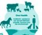 La Agencia Europea del Medicamento publica una clasificación revisada de antibióticos de uso animal
