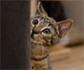 GRETCA: Eliminación inadecuada en el gato: problemas con el uso de la bandeja