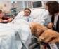 El Hospital 12 de Octubre pionero en aliviar el dolor de los niños ingresados usando terapia con perros
