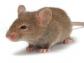 V curso de 'Introducción a la Investigación en Animales Modificados Genéticamente', en la sede de Colvema