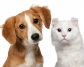 Cómo prevenir los problemas de comportamiento en las mascotas, tras los meses de confinamiento