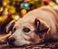 GRETCA: Cambios de comportamiento asociados al dolor en perros