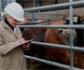La Comisión Europea destaca la eficacia de los controles contra fiebre aftosa en el Puerto de Algeciras, en los que participan inspectores veterinarios del Ministerio de Agricultura