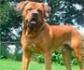 Expertos en comportamiento animal coinciden en que la raza no condiciona la peligrosidad de un perro pero sí su educación