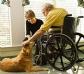 Las mascotas, aliadas para combatir la epidemia de la soledad entre ancianos