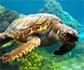 Rescatadas en 2018 un total de 38 tortugas marinas varadas en Baleares