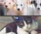 WSAVA: Recomendaciones para las sociedades protectoras de animales, durante la pandemia de COVID-19, para garantizar el bienestar animal