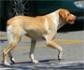 Francia confirma un caso de rabia en un cachorro abandonado y recogido en España, que podría haber deambulado por Valencia