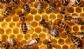 La AEMPS publica el listado de medicamentos veterinarios autorizados contra la vaaroosis de las abejas
