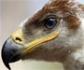 Aves, plantas y mamíferos, las otras víctimas del incendio de Doñana