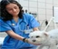 El Hospital Clínico Veterinario Complutense oferta más de 200 plazas para alumnos colaboradores, que abarcan  las  actividades hospitalarias en animales pequeños, grandes y exóticos