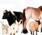 Europa lanza una breve encuesta sobre el uso y la aplicación de los indicadores de bienestar animal en la ganadería, que se puede cumplimentar hasta el próximo 25 de enero