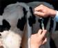 Siete alternativas para los antibióticos en producción animal