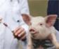 Plan Nacional frente a la Resistencia a los Antibióticos: retos y avances en los sectores de producción animal