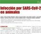 Varios de los más prestigiosos investigadores, analizan en nuestra revista la infección por SARS-CoV-2 en animales, bajo un enfoque One Health