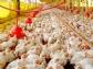 Gripe aviar: la tranquilidad futura es la bioseguridad presente