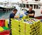 El Ministerio de Agricultura fomentará el uso de 'tecnología puntera' en los barcos pesqueros para combatir el anisakis