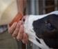 La Plataforma Europea de Bienestar Animal funcionará, al menos 18 meses más