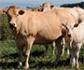 UE: Resistencias Antimicrobianas, Bienestar y Sanidad Animal, claves para una cadena alimentaria sostenible