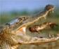 La ONU alerta: la biodiversidad desaparece a un ritmo 1.000 veces superior al natural