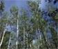 La CE destaca que España es el país europeo que más superficie aporta a la Red Natura 2000