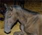 Publican el Protocolo 2021 de buenas prácticas para la eutanasia de caballos