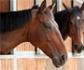 Cataluña detecta un caballo seropositivo al virus del Nilo occidental y otro sospechoso